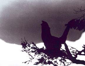 GERA Raufußhühner, Auerwild